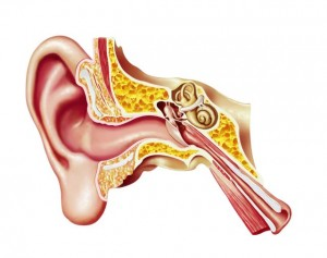 øre medium